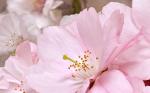 Керамическая плитка Belleza Декоративный массив Букет розовый 662