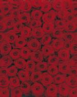 Обои Komar 4-077 Roses