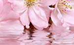 Керамическая плитка Belleza Декоративный массив Букет розовый 665