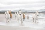 Обои Komar 8-986 White Horses