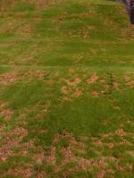Ковролин Искусственная трава Искусственный мох в песке №3