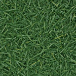 Линолеум Ivc Grass 025