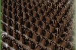 Грязезащитные покрытия Щетинистые покрытия Альфа Стиль Темный шоколад 137