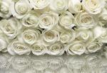 Обои Komar 8-314 A la Rose