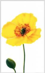 Керамическая плитка М-Квадрат Декор Моноколор Маки Цветок желтый 340031
