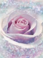 Обои Komar XXL2-020 Delicate Rose