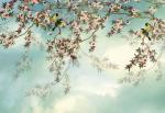 Обои Komar 8-213 Sakura