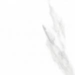 Керамическая плитка Шахтинская плитка (Unitile) Керамогранит Фиеста белый КГ 01 300*300