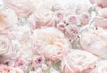 Обои Komar 8-976 Spring Roses