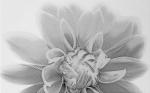 Керамическая плитка Шахтинская плитка (Unitile) Камелия декор 03