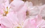 Керамическая плитка Belleza Декоративный массив Букет розовый 663