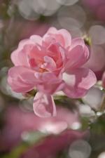 Обои Komar 4-713 Bouquet