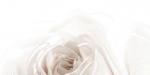 Керамическая плитка Belleza Декор Нежность бежевый А