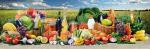Стеновые панели Кухонные фартуки Полноцветный кухонный фартук Урожай