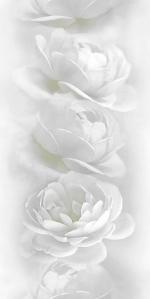 Стеновые панели ПВХ Белая роза 851