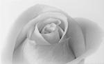 Керамическая плитка Шахтинская плитка (Unitile) Камелия декор 01