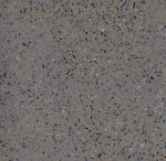 Линолеум Graboplast 4115-457