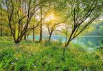 Обои Komar 8-524 Spring Lake