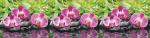 Стеновые панели Кухонные фартуки Интерьерная панель Орхидеи эпифиты