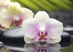 Керамическая плитка Березакерамика (Belani) Декор Азалия Орхидея 1 фисташковый