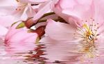 Керамическая плитка Belleza Декоративный массив Букет розовый 664