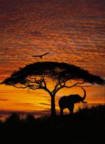 Обои Komar 4-501 African Sunset