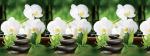 Стеновые панели Кухонные фартуки Белая орхидея