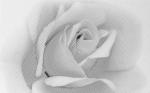 Керамическая плитка Шахтинская плитка (Unitile) Камелия декор 02