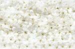 Стеновые панели Кухонные фартуки Весна 350201-00